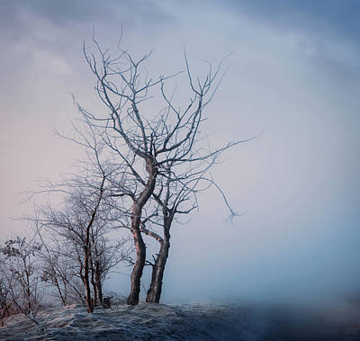 Photograph - Roadside Trees by Dan Jurak