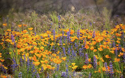 Photograph - Roadside Wildflowers  by Saija Lehtonen