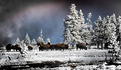 Photograph - Roaming In Winter by Karen Wiles