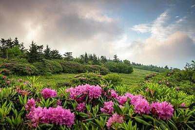 Photograph - Roan In Bloom by L A Patterson