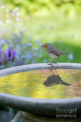 Photograph - Robin On A Garden Birdbath  by Tim Gainey