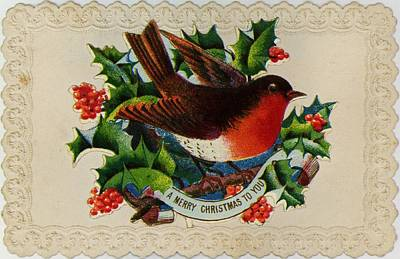 Robin Redbreast Art Print by Hulton Archive