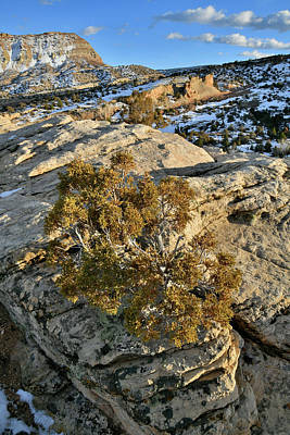 Claude Monet - Rock Clinging Tree in Colorado National Monument by Ray Mathis