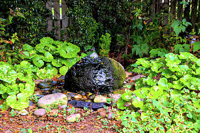 Photograph - Rock Garden Bubbling Rock by Floyd Snyder