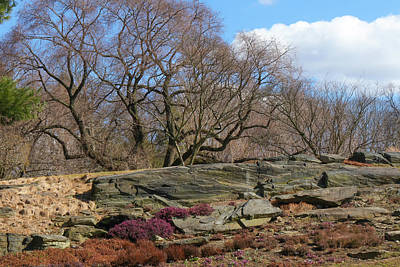 Photograph - Rocky Landscape by Cate Franklyn