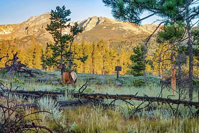Photograph - Rocky Mountain Elk - Estes Park Colorado Landscape by Gregory Ballos