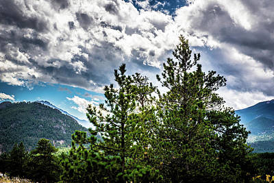 Photograph - Rocky Mountain Pines by James L Bartlett