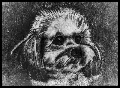 Animals Drawings - Rocky The Dog Portrait W/ Border by Michael Panno