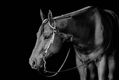 Photograph - Roger by Kirstie Marie Jones