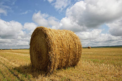 Field Photograph - Rolled Hay Bale  In Harvested Field by Cameron Davidson