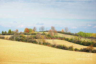 Photograph - Rolling Hills In Fall by Les Palenik