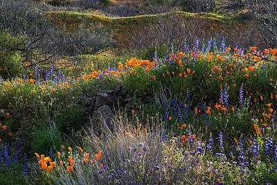 Photograph - Rolling Hills Of Desert Blooming Lupine And Poppies by Dave Dilli
