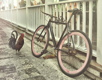 Photograph - Rolling Rooster by Jamart Photography