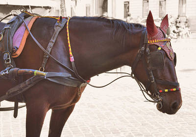 Photograph - Roman Carriage Colors  by JAMART Photography