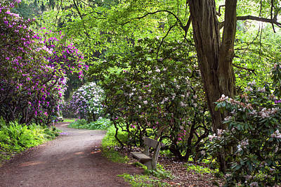 Photograph - Romantic Pathway In Rhododendron Woods by Jenny Rainbow
