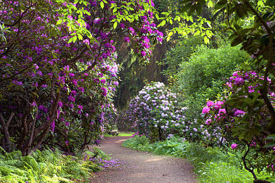 Photograph - Romantic Walk Among Rhododendron Blooms by Jenny Rainbow