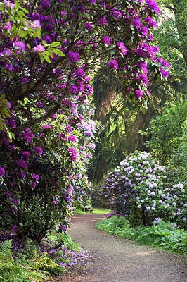 Photograph - Romantic Walk Through Rhododendron Forest by Jenny Rainbow