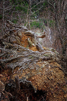 Photograph - Roots And Falls by Alan Raasch