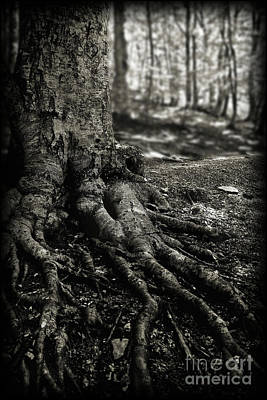Photograph - Roots by Arnaldo Tarsetti