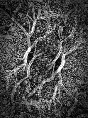 Photograph - Roots by Jeff Brunton