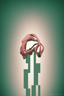 Photograph - Rose - Abstract Geometric Frog Skull Art by Joseph Westrupp