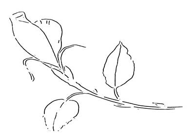Drawing - Rose Bud At Paint My Sketch Art Group by Delynn Addams