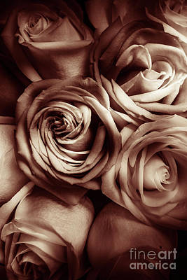 Heavy Metal - Rose Carmine by Jorgo Photography - Wall Art Gallery