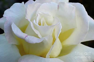 Pineapple - Rose by Debby Pueschel