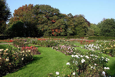 Photograph - Rose Garden At Greenwich Park by Aidan Moran