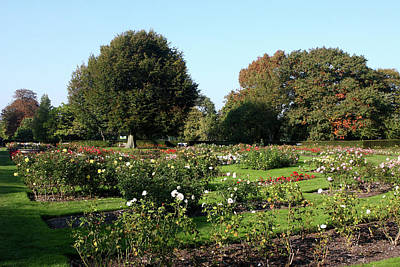 Photograph - Rose Garden At Greenwich Park, London by Aidan Moran