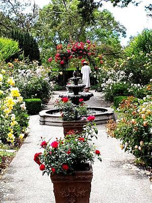 Painting - Rose Garden by Nikki Dalton