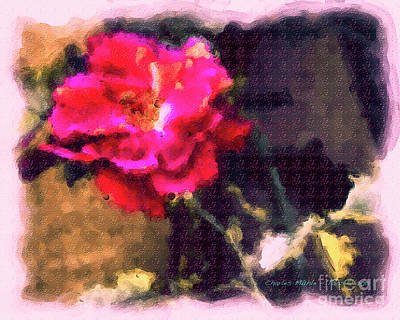 Painting - Rose In Aquarelle by Charles Muhle