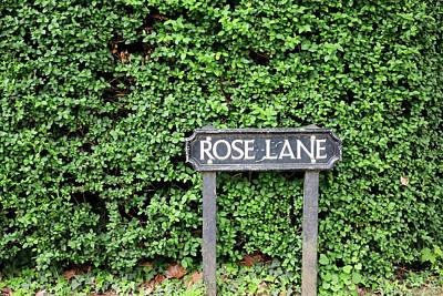 Photograph - Rose Lane by Nicholas Blackwell