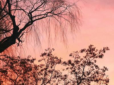 Photograph - Rose Wine Sunset by Will Borden