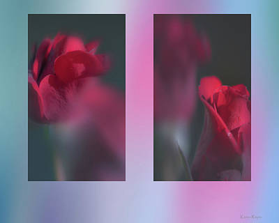 Photograph - Roses by Philip and Karen Rispin