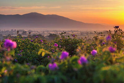 Photograph - Roses Valley by Evgeni Dinev