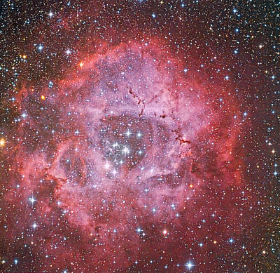 Photograph - Rosette Nebula Caldwell 49 by Astrophotography By Terry Hancock Used With Permission