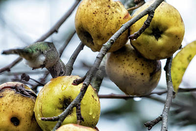 Photograph - Rotten Apples And Invisible Wings by Belinda Greb