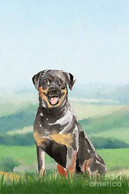 Animals Royalty-Free and Rights-Managed Images - Rottweiler by John Edwards