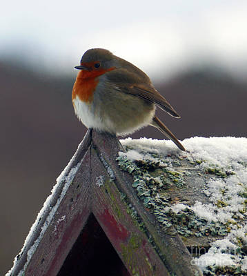 Photograph - Round Robin by Phil Banks