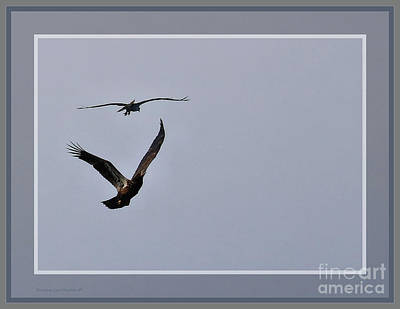 Photograph - Round Two Osprey Verses Eagle, Framed by Sandra Huston