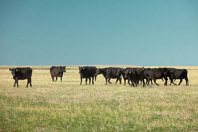 Photograph - Row Of Angus by Todd Klassy