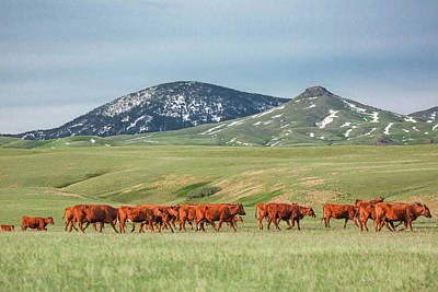 Photograph - Row Of Reds by Todd Klassy