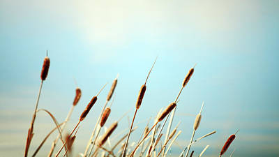 Photograph - Row Of Reeds by Todd Klassy