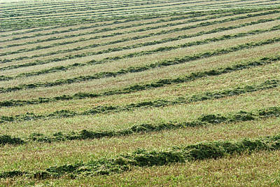 Photograph - Rows And Rows Of Windrows by Todd Klassy