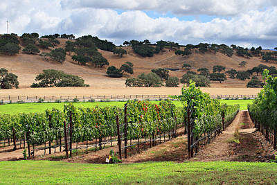 Photograph - Rows Of Grape Vines At A Vineyard In by S. Greg Panosian