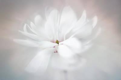 Photograph - Royal Star Magnolia by Usha Peddamatham