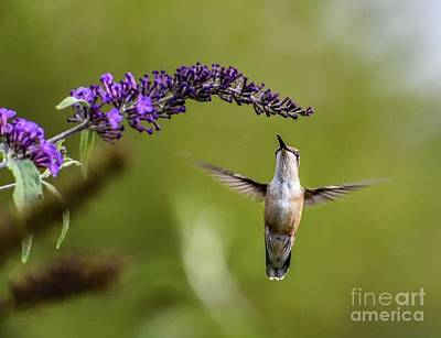 Classical Masterpiece Still Life Paintings - Ruby-throated Hummingbird And The Butterfly Bush by Cindy Treger