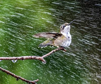 Watercolor Butterflies - Ruby-throated Hummingbird Enjoying The Sprinkler by Cindy Treger