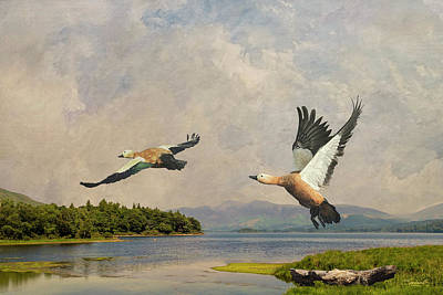 Digital Art - Ruddy Shelducks by Spadecaller
